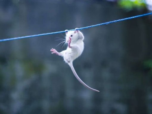 cute-mouse-hanging